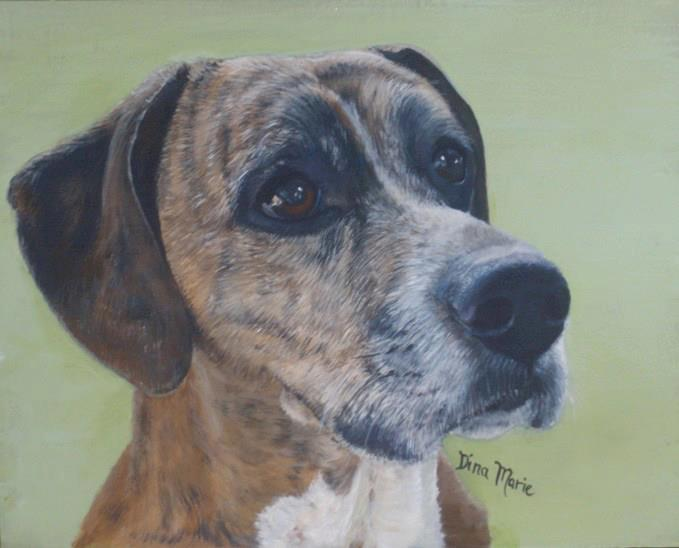 View My Pet Portrait Gallery