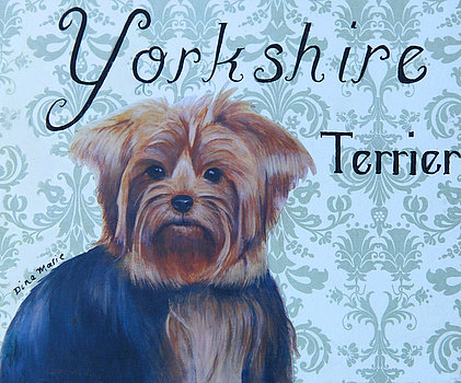 yorkshire-terrier-mixed-media-dina-marie-pratt